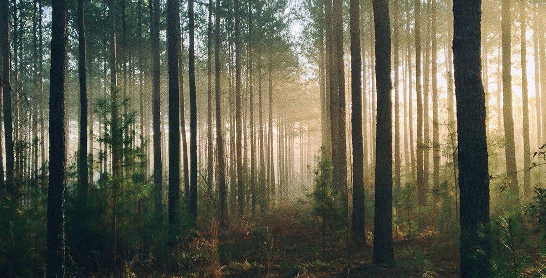 Kan man vara i skogen på sommaren
